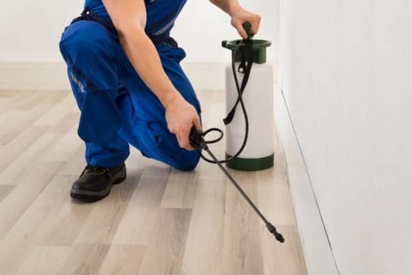 Rapid and Effective Pest Treatment