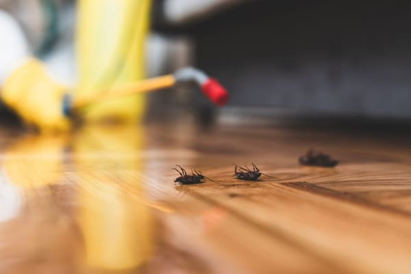 We Provide Timely Pest Control Service